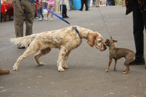 dog-greeting